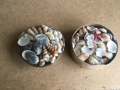 Baskets of shells. .....2 for £2..