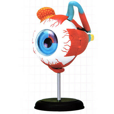 4D EYEBALL Human Body Eye ball Anatomy 3D Puzzle Model kit science Medical USA