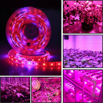 5M 5050 LED Grow Strip Light Lamp Full Spectrum For Hydroponic Greenhouse Plant