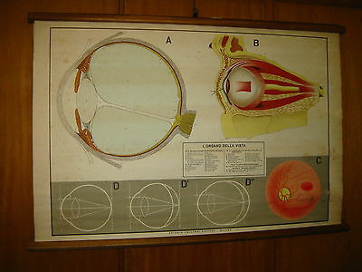ITALY VALLARDI VISION EYEBALL EYES SCHOOL CANVAS MAP MAPPA CARTE KARTE 1960s
