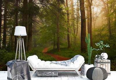 Woodland Trees Path Photo Wallpaper Wall Mural (1X-1028290)