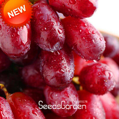 100 PCS/Lot Sweet Red Grape Seeds Advanced Fruit Seed Natural Growth Grape