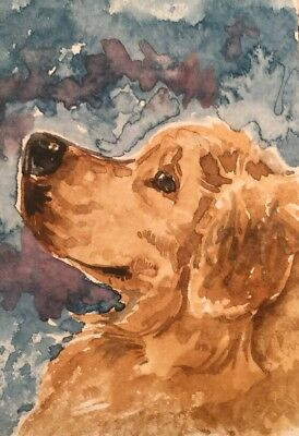 ACEO Golden retriever Dog Headshot. A Watercolor Original Art By NFISH