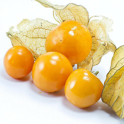 Physalis Peruviana Seed Fruit Golden Berry Seeds Gooseberry Latern Bonsai 200Pcs