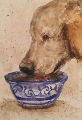 ACEO Golden retriever Dog Drinking . A Watercolor Original Art By NFISH