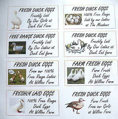 24 x SMALL CUSTOMISABLE DUCK EGG BOX LABELS 70 x 35mm