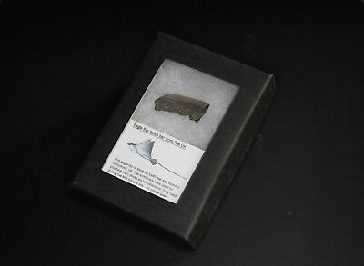 Fossil eagle ray tooth bar in a  gift box