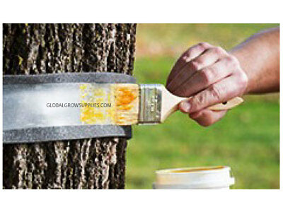 Tree Insect Barrier Glue 1 kilo tub - Prevent crawling insects organically