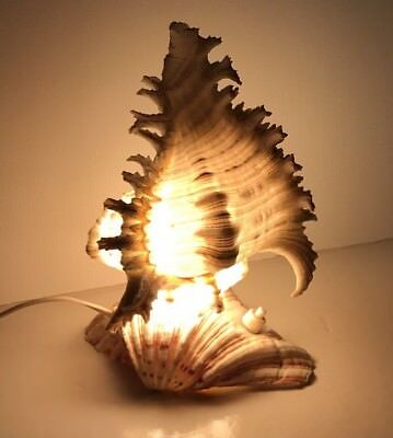 Vintage Retro. Shell Lamp/Light- Excellent Working Condition.