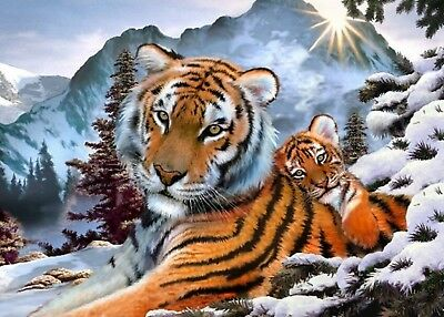 SNOW TIGERS PAINT BY NUMBERS CANVAS PAINTING KIT 20 x 16 ins FRAMELESS, ACRYLIC