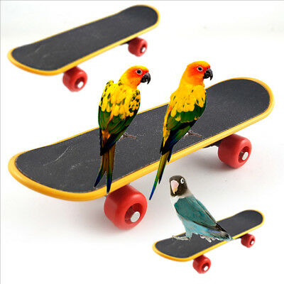 Durable Mini Skateboard Parrot Bird Cage Toy Chew Training Ornaments Gift Good