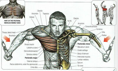 """008 Human System - Body Anatomical Chart Muscular Skeletal 23""""x14"""" Poster"""