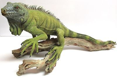 "Retired Extremely Rare Iguana 20"" NEW In Original Box Country Artists CA02314"