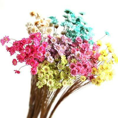 Pressed Bunch of Flowers with Branches Real Natural Dried Rare DIY Floral Decor