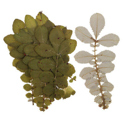 10pcs Natural Dried Leaves Flower Pressed Dried Flowers for Art Craft DIY