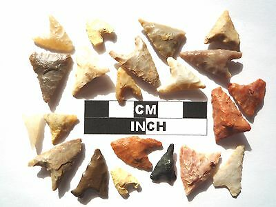 20 x Triangle Style Neolithic Arrowheads - 4000BC - (989)