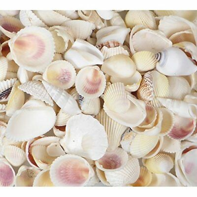 White Seashells 200g Shell Mix Beach Wedding Shells 2-5cm Cockles Clams Icicles