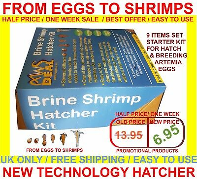 Brine Shrimp Hatcher Incubator / FROM EGGS TO LIVE SHRIMPS / EASY TO USE