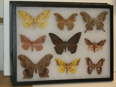 Real framed Moth Collection from Mexico #2