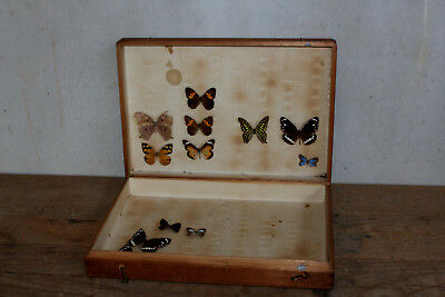 1920s Insect Taxidermy Cedar Box Containing Some Butterflys