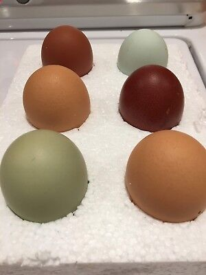 Large mix of hatching eggs  6 Eggs Mixed Breeds Nice Selection