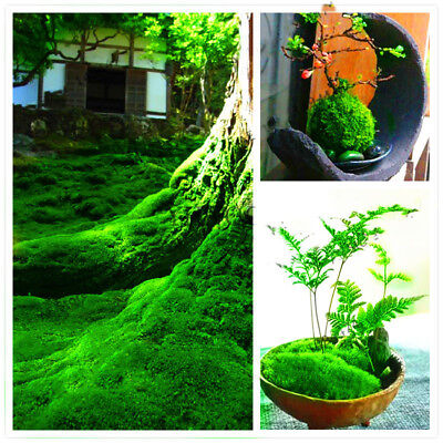 100pcs Green Moss Seeds Rare Exotic Bonsai Moss Seeds lovely ,Potted Plant