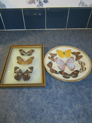 2 Vintage Real Mounted Framed Brazil Butterfly Wall Plaques