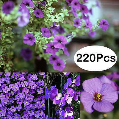 220Pcs Aubrieta Deltoidea Seeds Romantic Purple Mustard Home Garden Flower Seeds