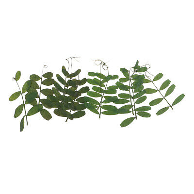 10 Pcs Pressed Dried Real Bean Leaves for Necklace Making Jewelry Findings