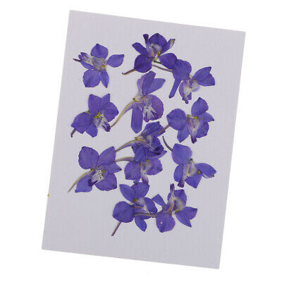 12pcs Natural Blue Flower Pressed Dried Flowers for Art Craft DIY Ornament