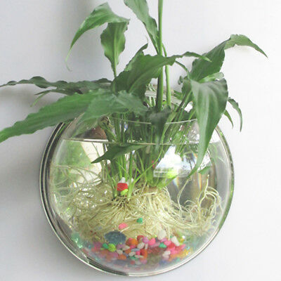 Fish Bowl Wall Aquarium Bubble Tank Acrylic Hanging Mounted Mount Home Plant