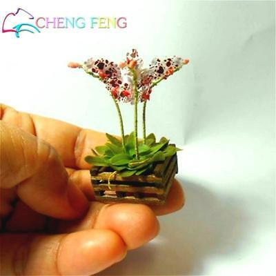 Mini Bonsai Orchid Seeds Indoor Home Miniature Flower Plants Pot seed 100pcs 1
