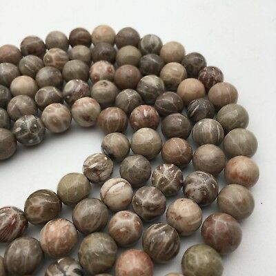 Natural Fossil Coral Round Loose Gemstone Beads Size 6mm//8mm//10mm