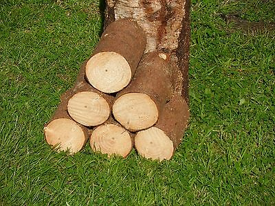 """Decorative Display Logs Natural Spruce Bark wood logs Cleaned 4"""" x 4-5"""" approx"""