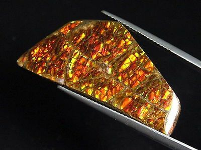 Ammolit / Ammolite 26,65 Ct. bunter Cabochon 38 mm (979w)