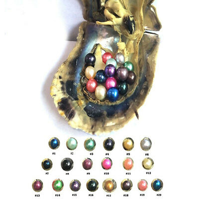 Individual Wrapped Freshwater Akoya Oysters with 6-7mm Large Wish Pearl Beads 1X