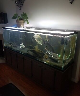 200 gallon Fish Tank, Aquarium with Stand and lid with led lighting.