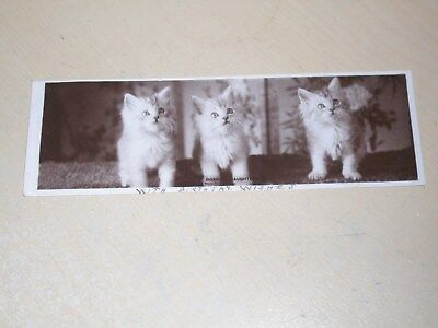Early 1906 Bookmark Rp Postcard - Cats - Dossie's Daughters - Vgc