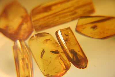 Amber Fossill Insects in BALTIC Amber inclusion lot///