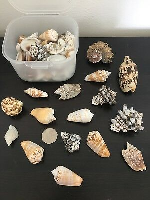 A Beautiful Collection Of Sea Shells