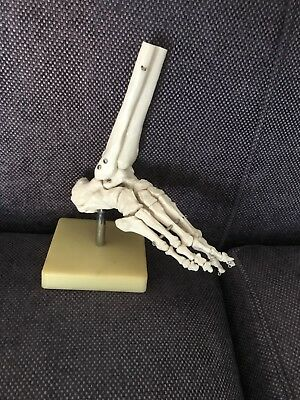 New Life Size Foot Joint Anatomical Skeleton Model Human Medical Anatomy