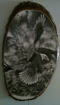 Bald Eagle Drawing Pine Wood Wildlife Country