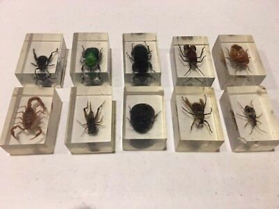 Vintage Bug Lot Encased In Lucite Resin Scorpion Beetles & More Science Toy