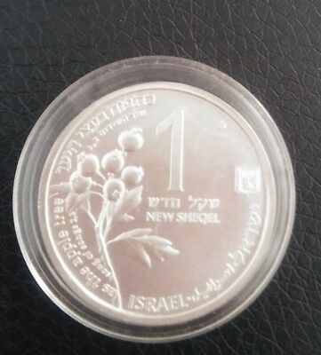 Israel 1993 Rare Silver 1 New Shekel Coin Hart And Apple Ttee from holly lend