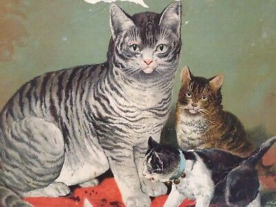 Large Antique Victorian Image Of Cat With Kittens