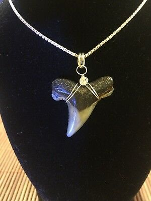 shark tooth Fossil Silver Chain