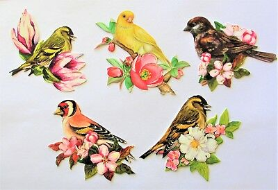 3D Easy Die Cut Card Toppers Birds with Flowers Canary Assorted Type 1