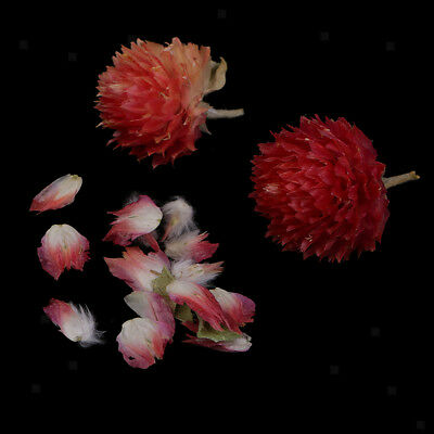 4g Natural Real Flower Dried Flowers Globe Amaranth for DIY Pendants Charms