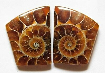 27.15 Cts Natural Ammonite (20.5mm X 16mm each) Loose Cabochon Match Pair A16