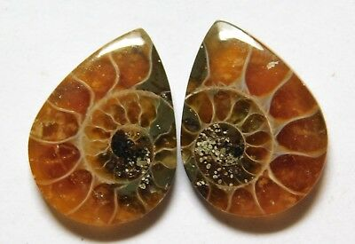 14.75 Cts Natural Ammonite (19mm X 14mm each) Loose Cabochon Match Pair A12